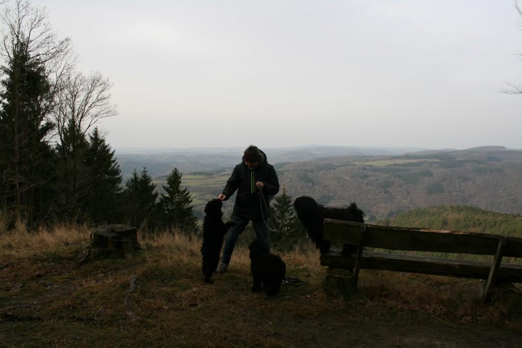 es gibt auch Erdmännchen in der Eifel