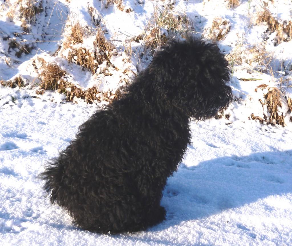 Ari Málna im Schnee